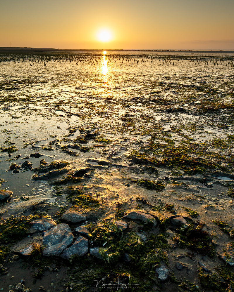 Sunset at the Wadden Sea during low tide. (Canon EOS 1Dx + 24mm | ISO100 | f/11 | 1/60)