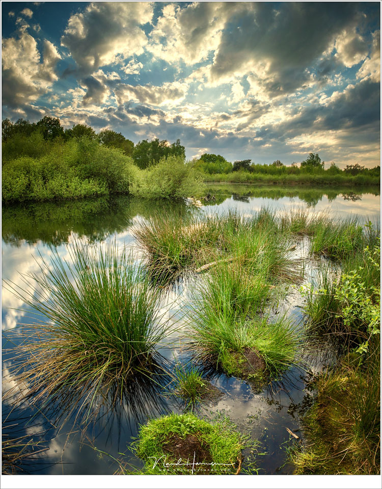 A vertical panorama of the moorland in the Netherlands, with a beautiful sky filled with clouds that refused to turn red at sunset. (Canon EOS 5D4 + 17mm | ISO100 | f/11 | shutterspeed unknown)