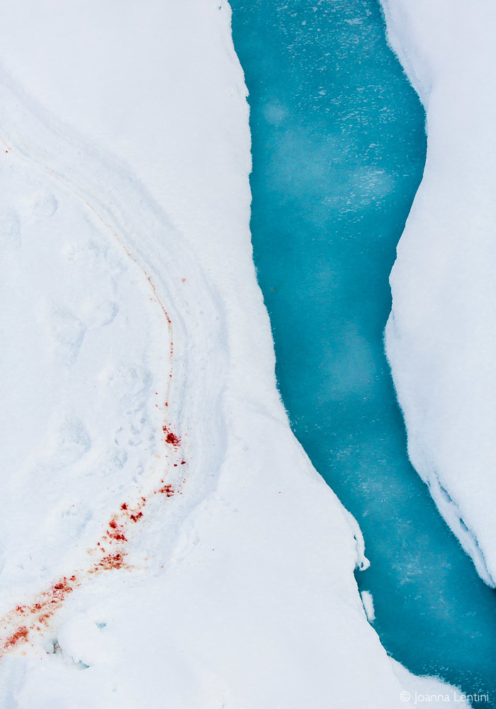 floe of life, behind the image, joanna lentini, arctic photography