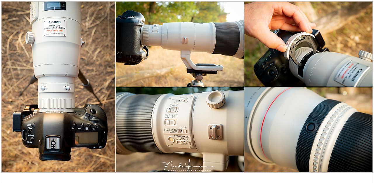 An impression of the EF 800mm lens. Is is a wonderful lens, well build and with lots of possibilities concerning auto focus, lens stabilisation and focus limiters. You can even drop in a filter if you like, because the large front lens element is too larg