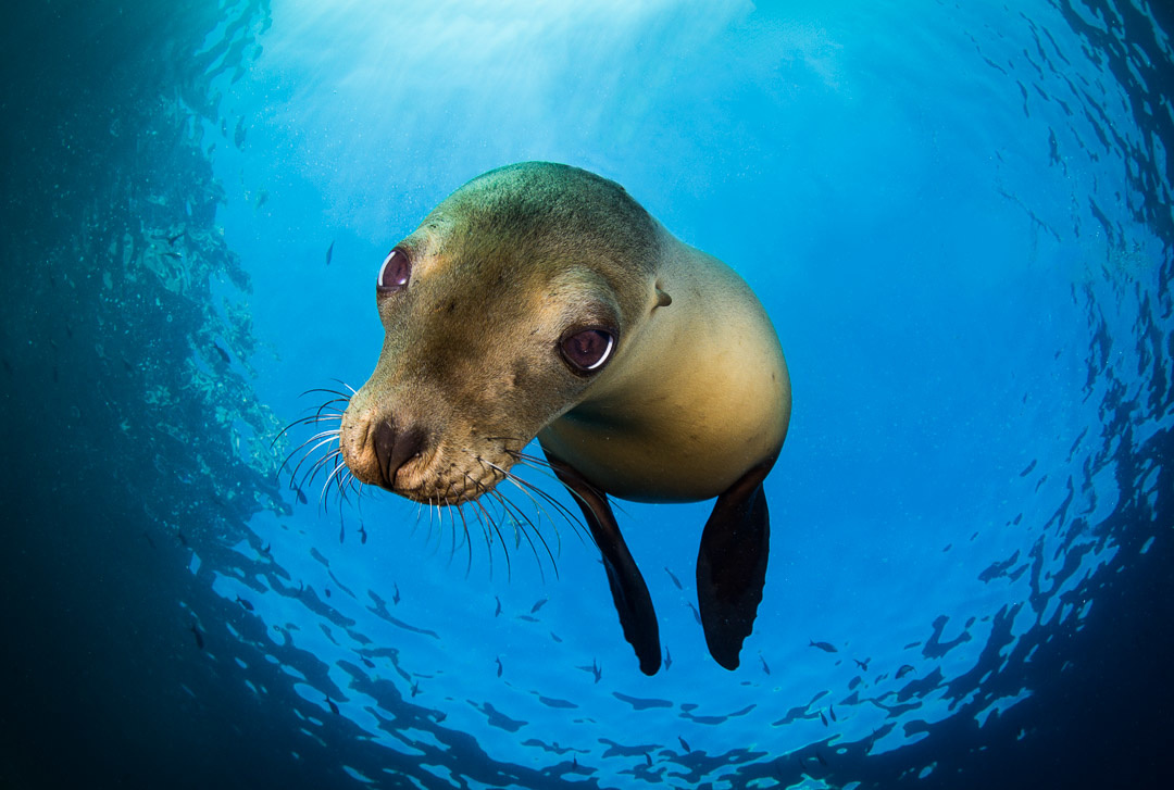 joanna lentini, underwater photography, wildlife photography, deep focus images