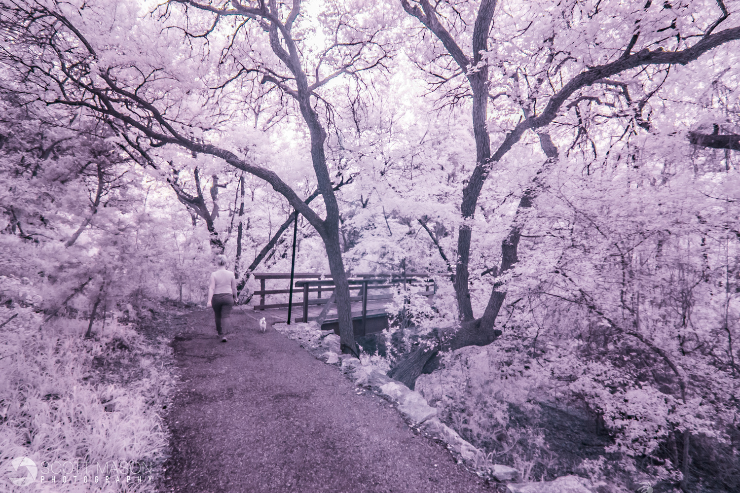 an infrared photo of a nature walk scene