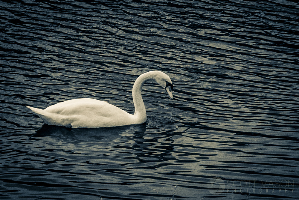 an infrared photo of a swan on a lake