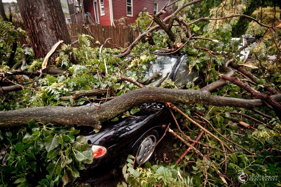 a car being crushed under a fallen tree