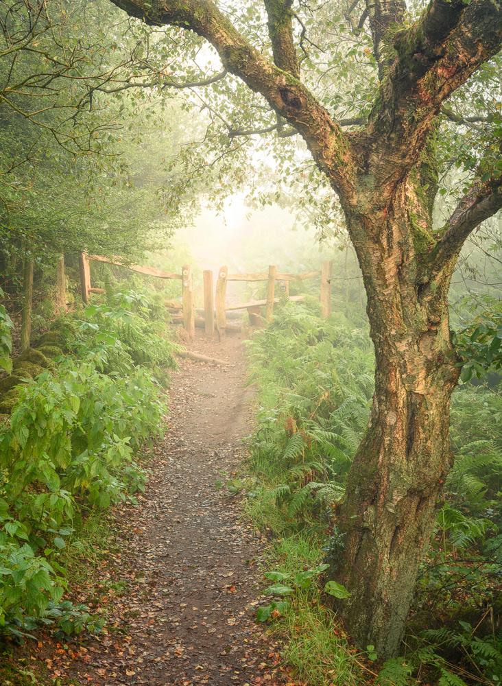 Summer Morning Bliss, Peak District, UK