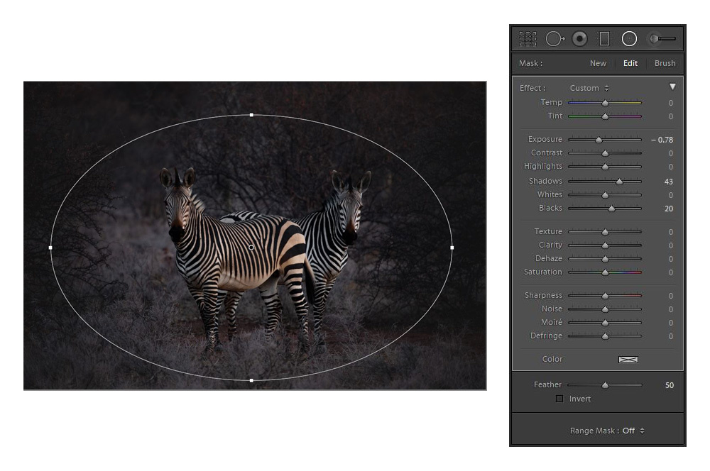 Using a radial filter on an image of zebras