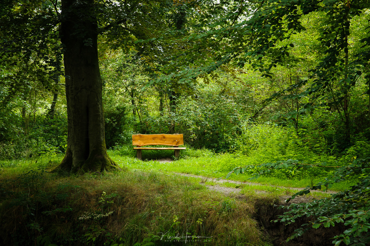 A simple bench in a forest. It has a different color, but it does not really stand out. You need to convert the photo to black and white to see how the brightness in the photo is.