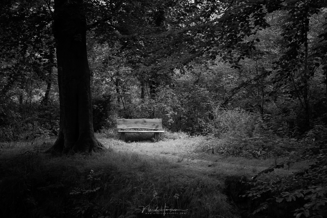 With a circular gradient I darkened the surroundings. This way the bench becomes a point of interest. The photo has gained a lot of contrast.