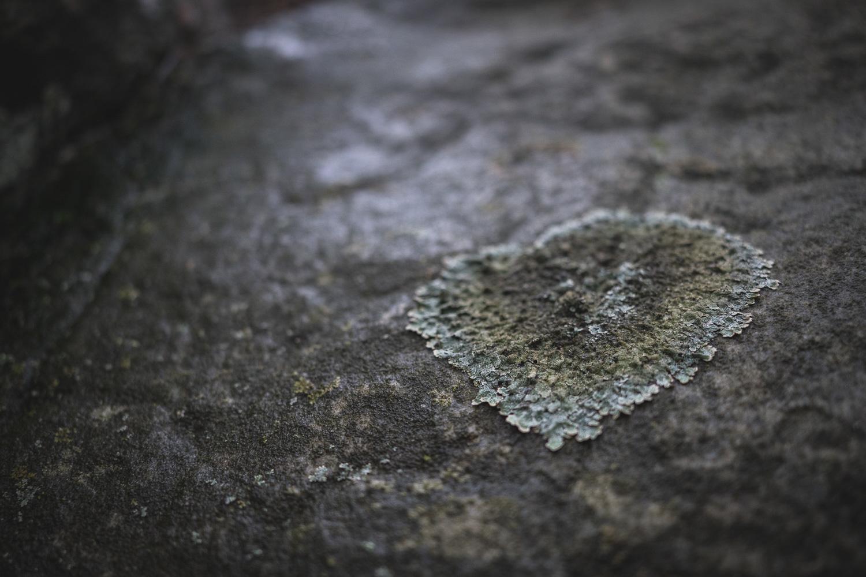 Tamron 24mm f/2.8 lichen macro
