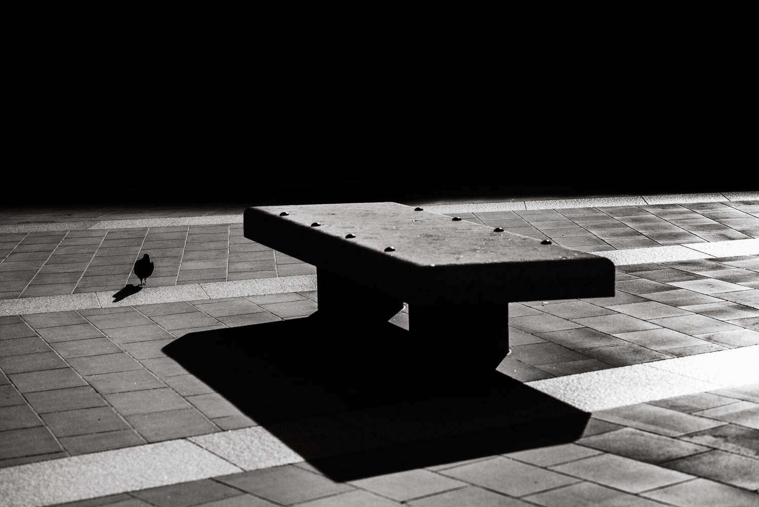 A pigeon and a stone bench