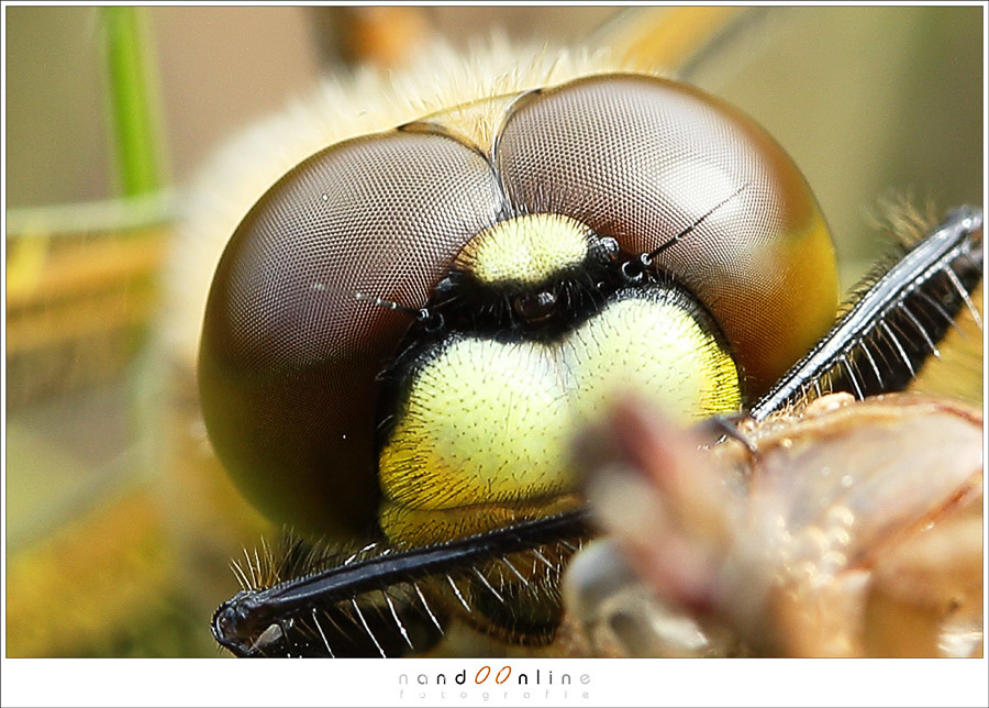 Super macro lenses can get really close. With magnifications up to 5 times and perhaps even more.