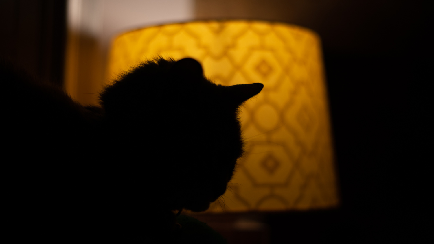 Underexposed pet portrait next to lamp