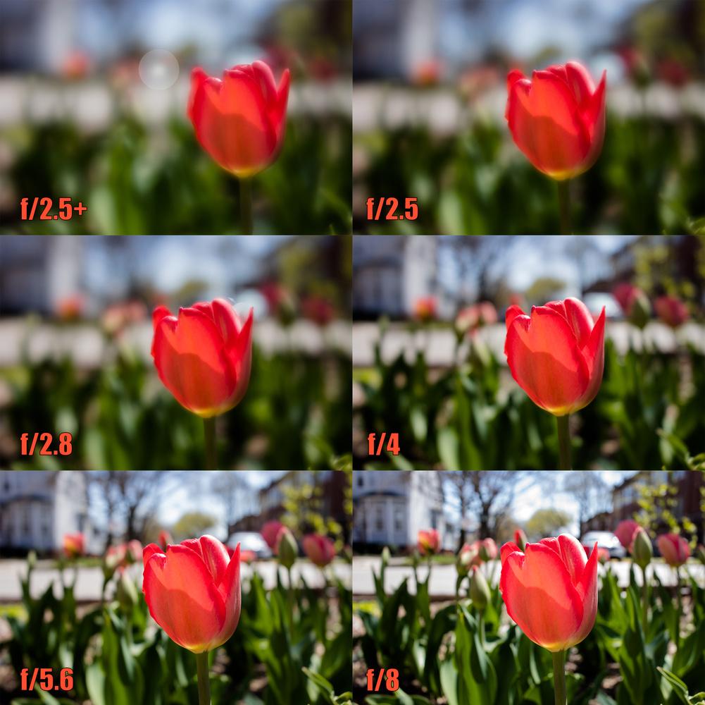tulip comparison