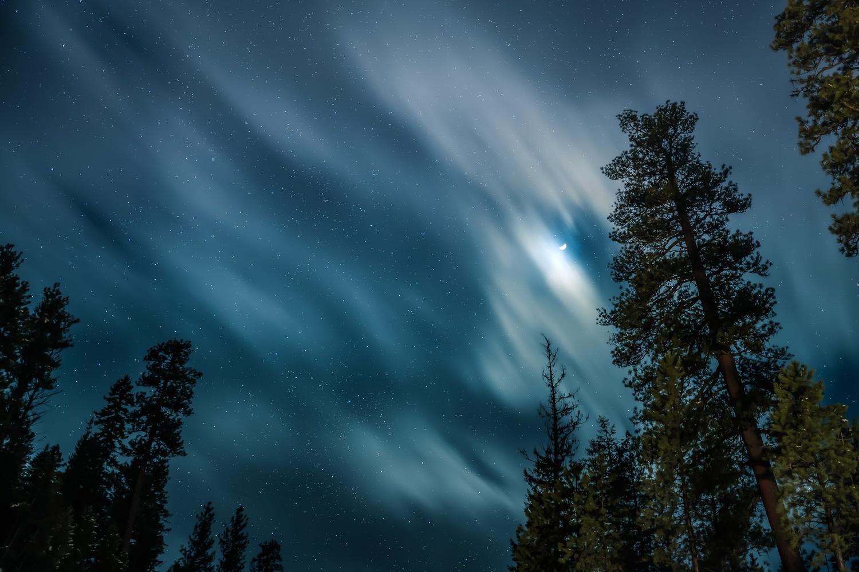 Trees in night sky