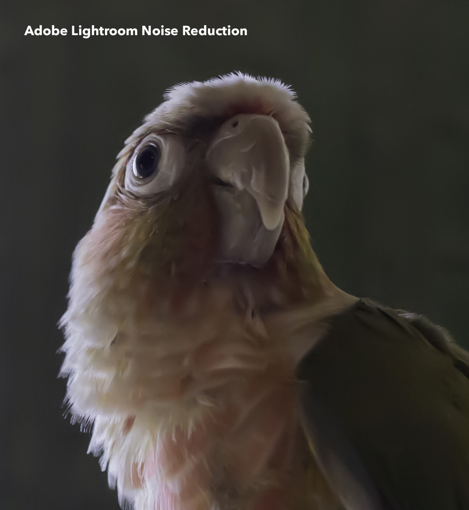 Adobe Lightroom Noise Reduction Output