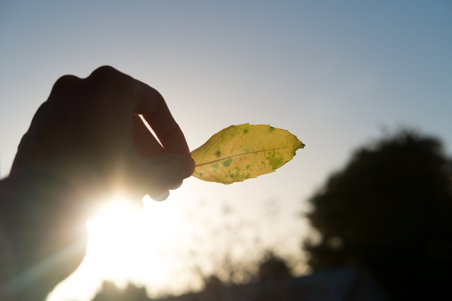A person holding a leaf