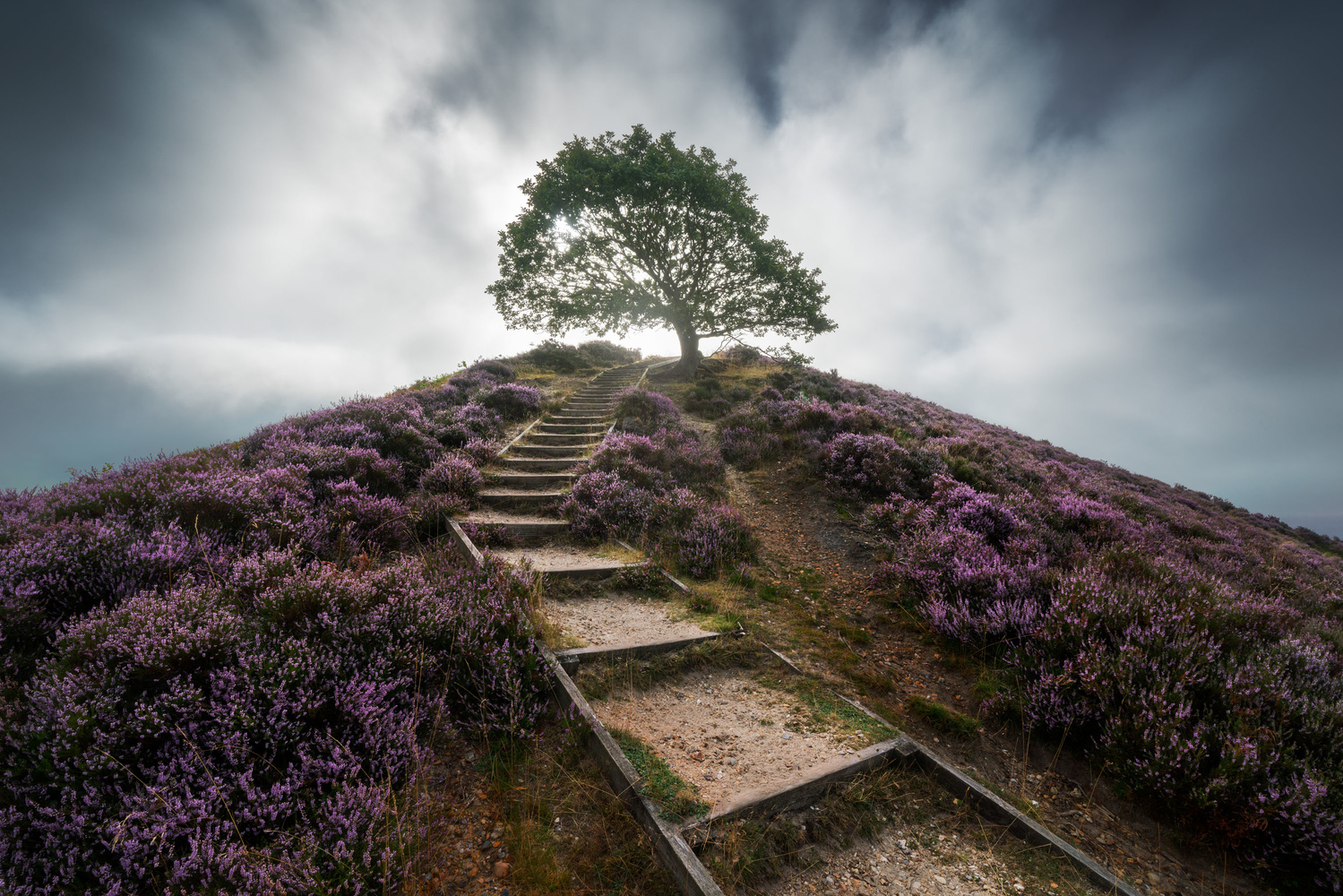 Heather Season Is Here, This Is How to Photograph It 2