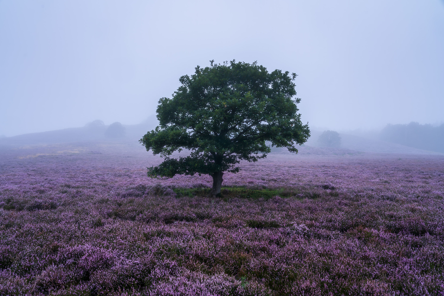 Heather Season Is Here, This Is How to Photograph It 1
