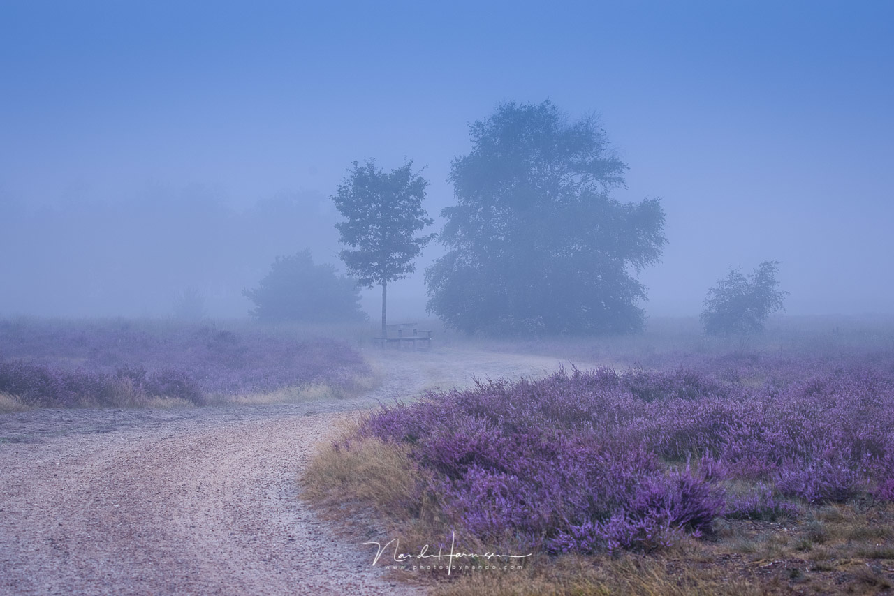 Reality or manipulation?  This one is a merger between two images. One of the path between the heather, and one of the trees and bench in the mist. Shot in the same location, two minutes after each other. But two images nevertheless.