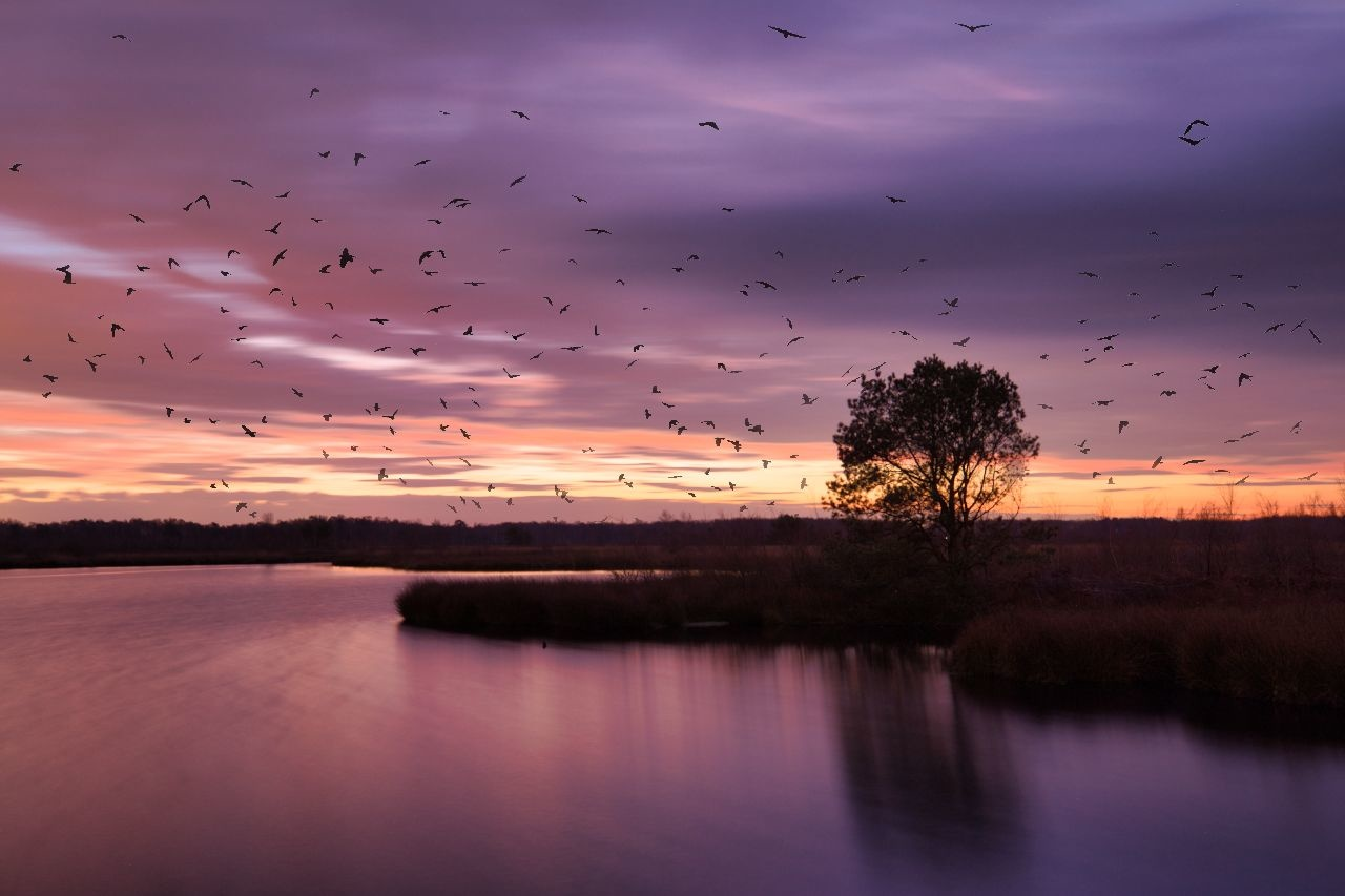 A flock of birds at sunrise. Or is it? In reality it is a long exposure at sunrise and I added the birds through the augmented sky option in Luminar 4. Did you think it was real the moment you saw the image?
