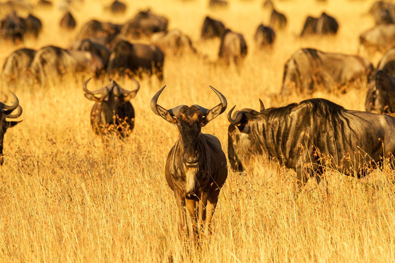 let us go photo travel photography tanzania ndutu serengeti migration