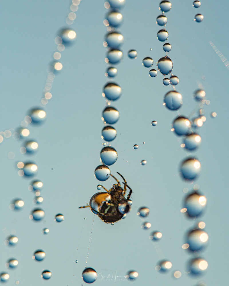 Although you will loose the ability to focus at infinity, for macro you don't need it. By the way, this image of the garden spider and dew drops is shot with the 100mm macro lens.