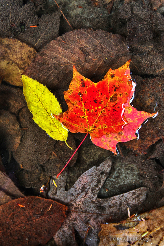 The Photographer's Guide to Planning the Ultimate Fall Color Trip 14