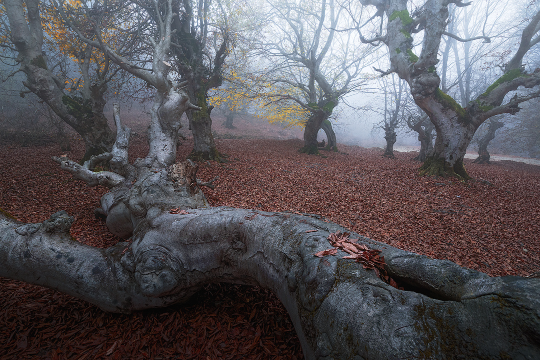 Fogy forest by ali gorohi
