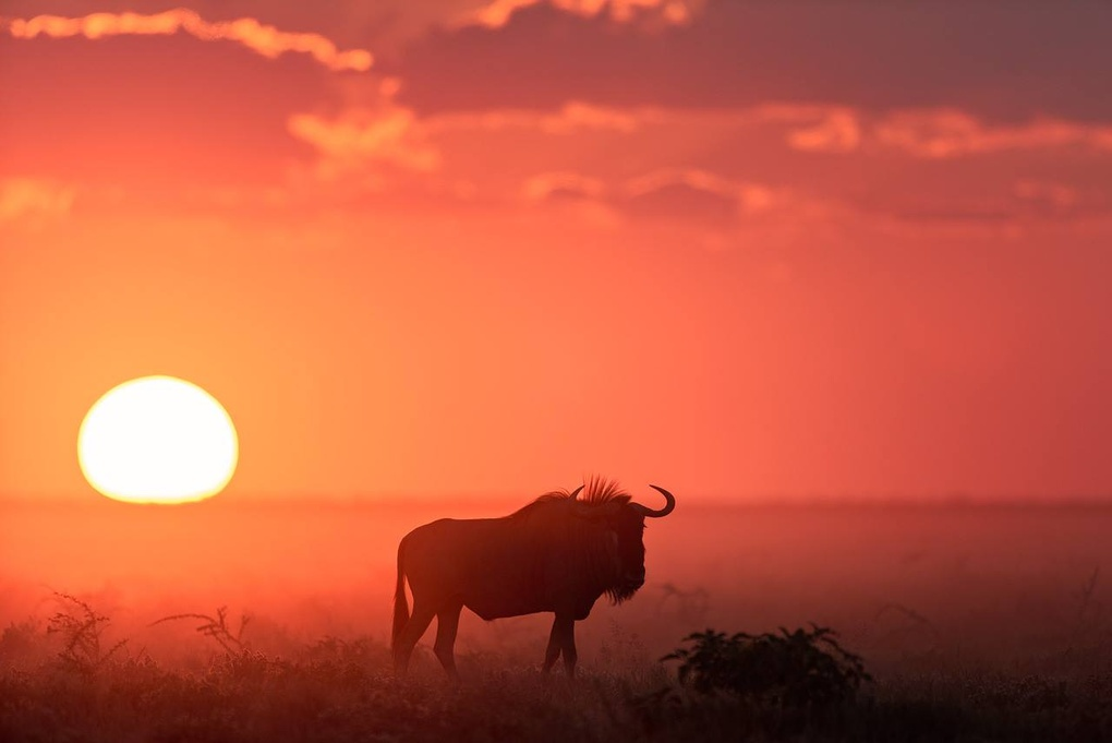 Etosha Sunset  by Marc Schmittbuhl