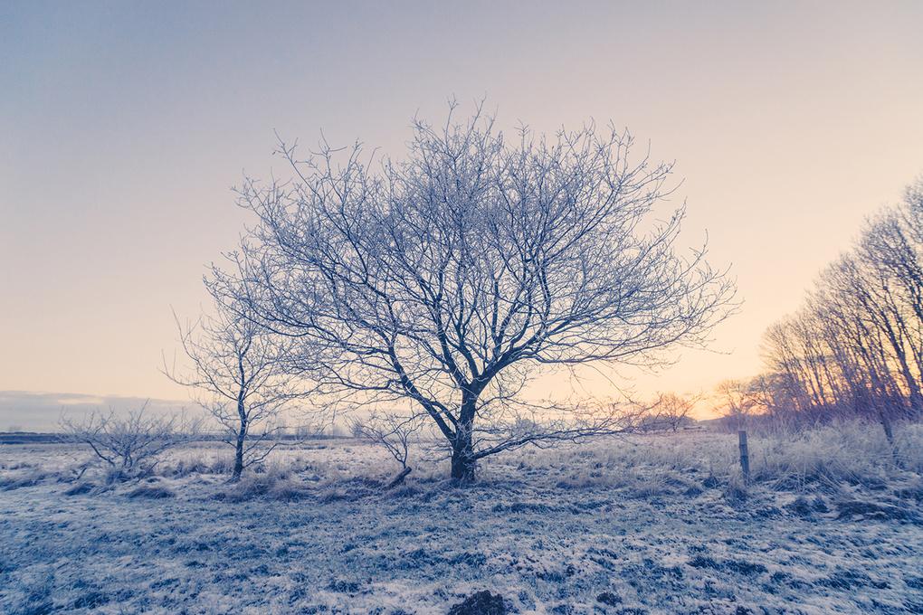 Frozen tree on a field by Kasper Nymann