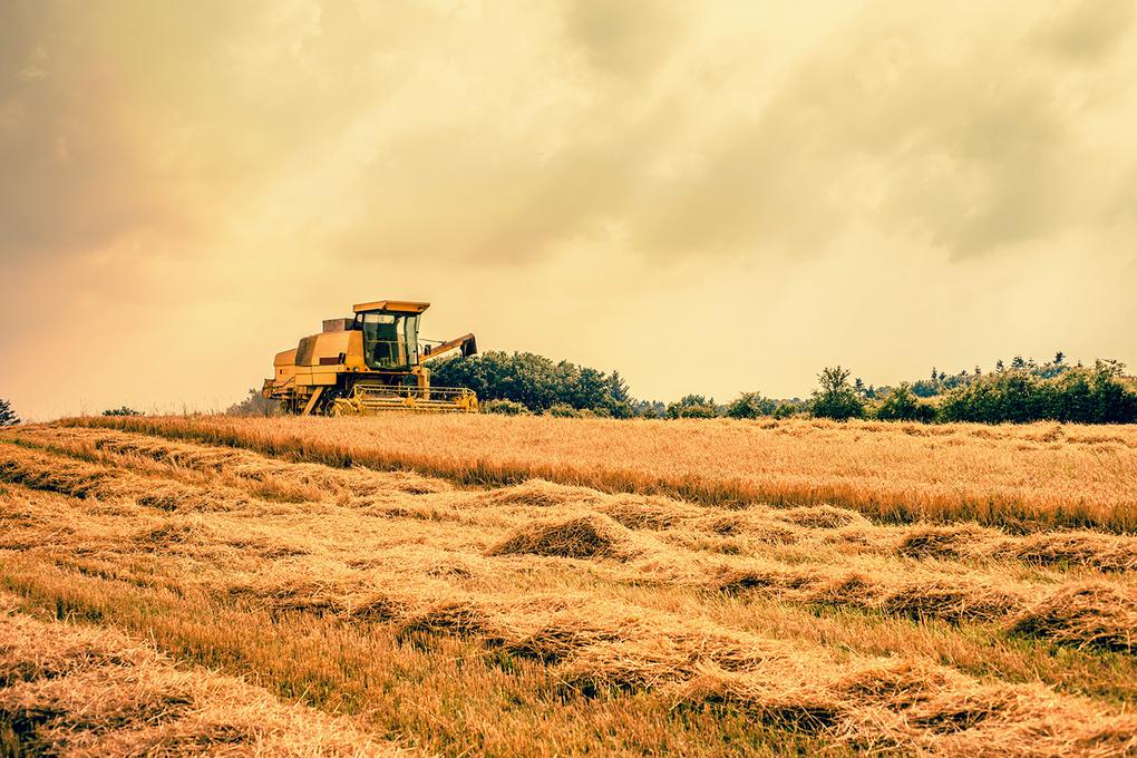 Harvester on a field by Kasper Nymann