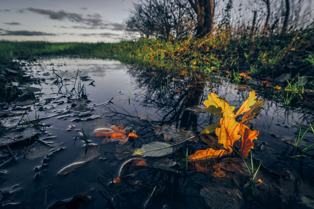 Autumn maple in a puddle by Kasper Nymann
