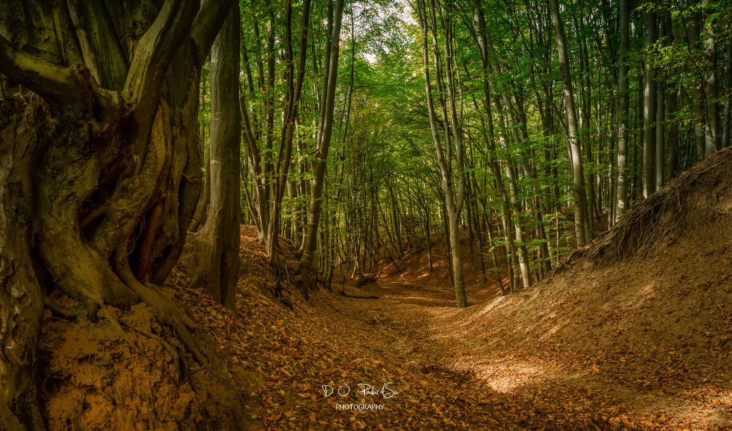 through the green forest by D O Pandurasu