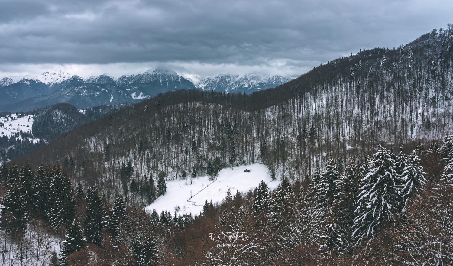 winter in Romania by D O Pandurasu