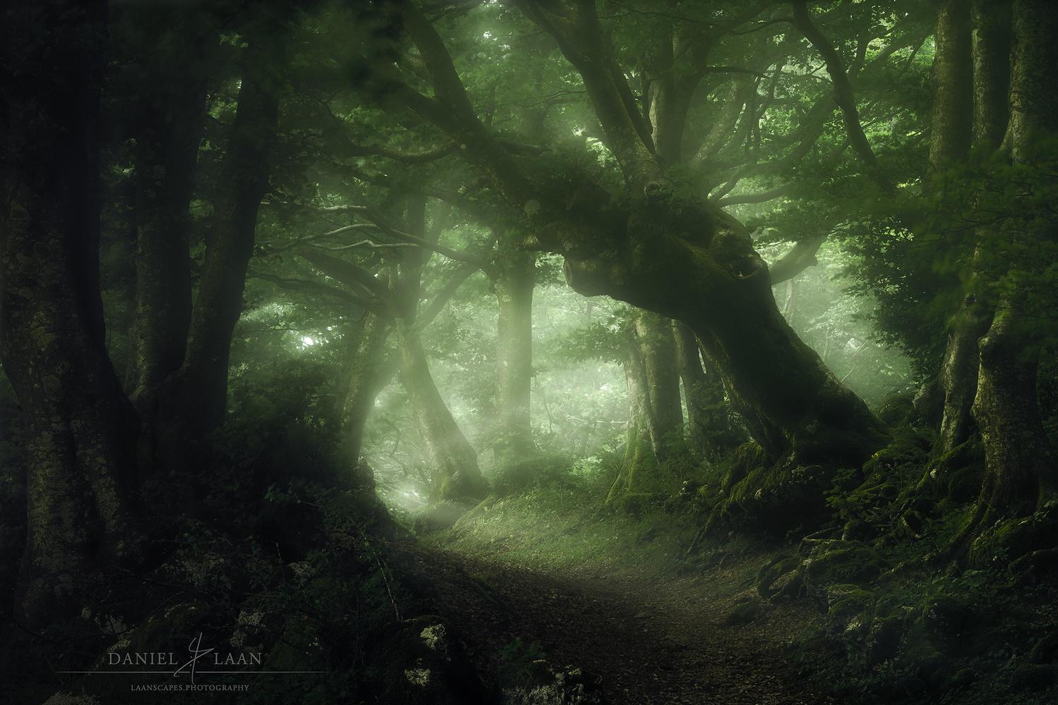 Whisperwood by Daniel Laan