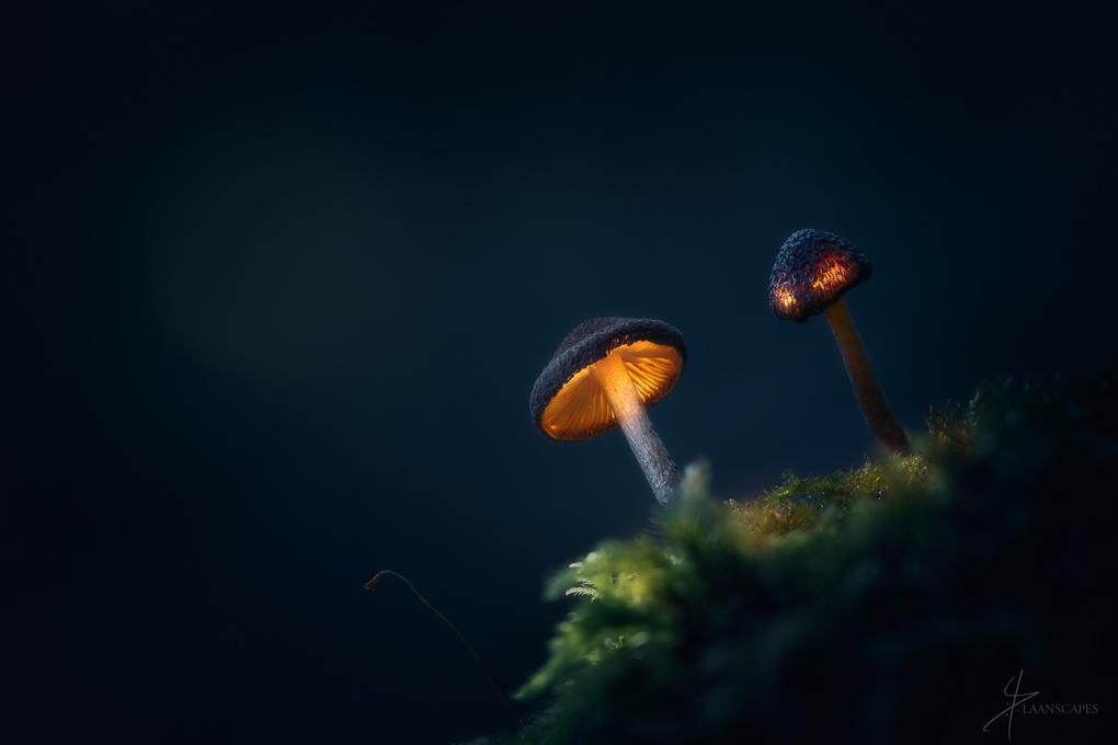 Creatures of Dreamland by Daniel Laan