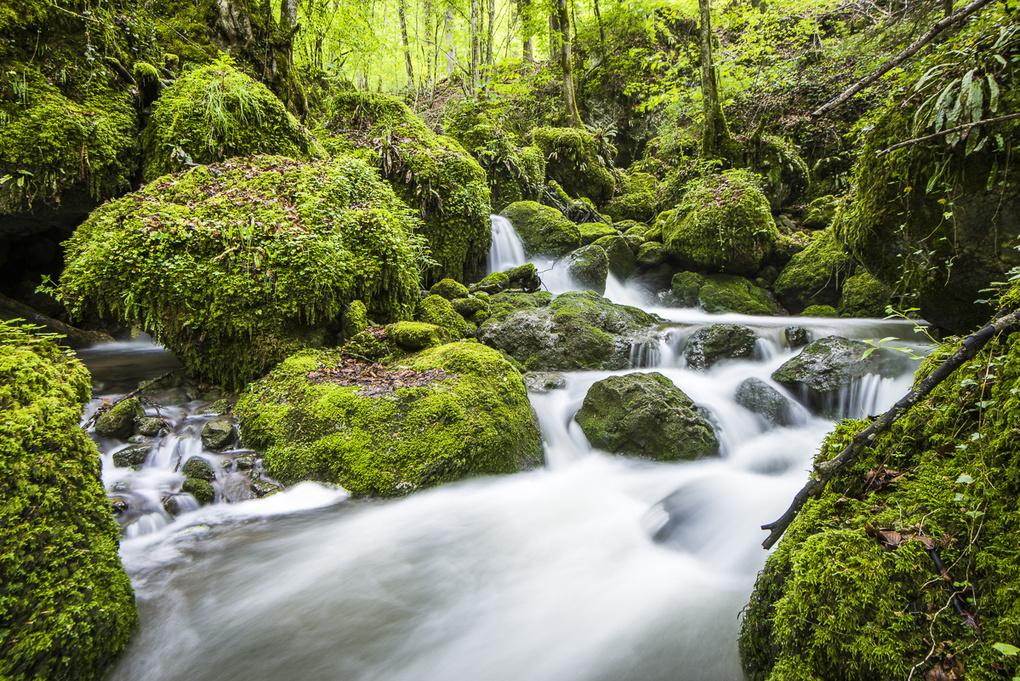 swiss rainforest by Roman Burri