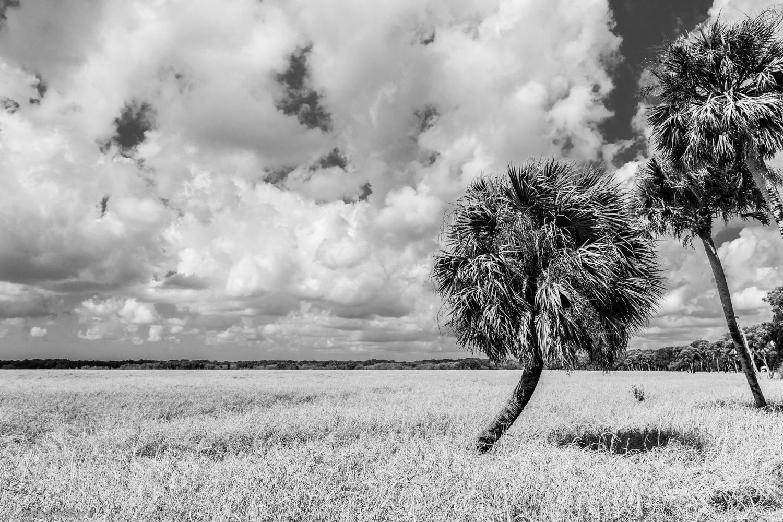 Myakka Prairie #1 by Robert Barr