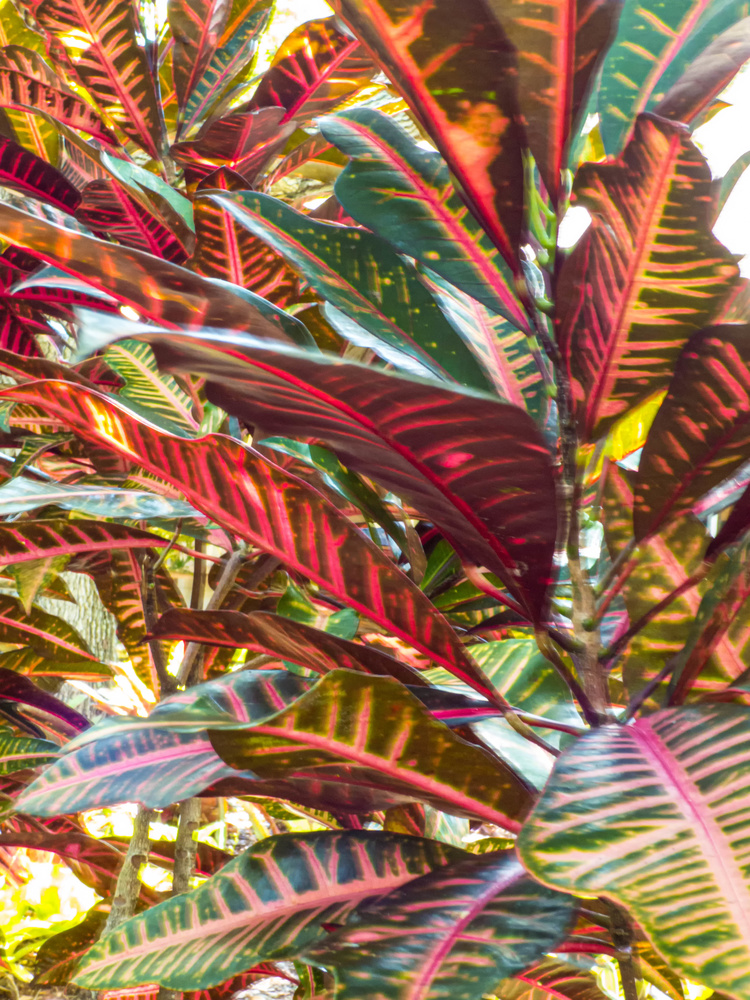 Tropical Mosaic by Robert Barr
