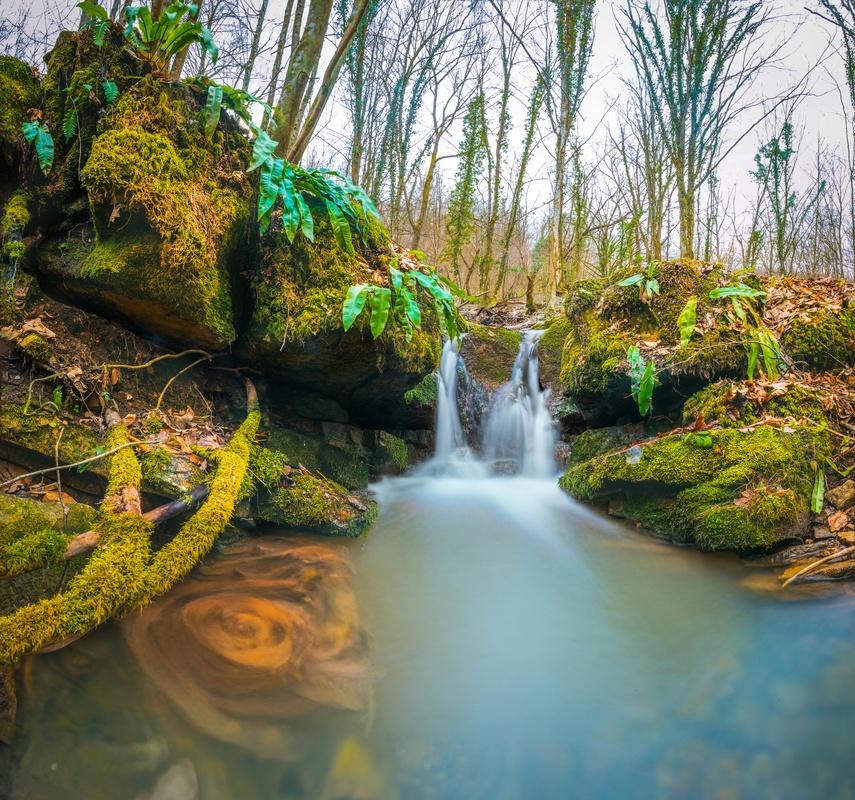 Pure nature by Srdjan Vujmilovic