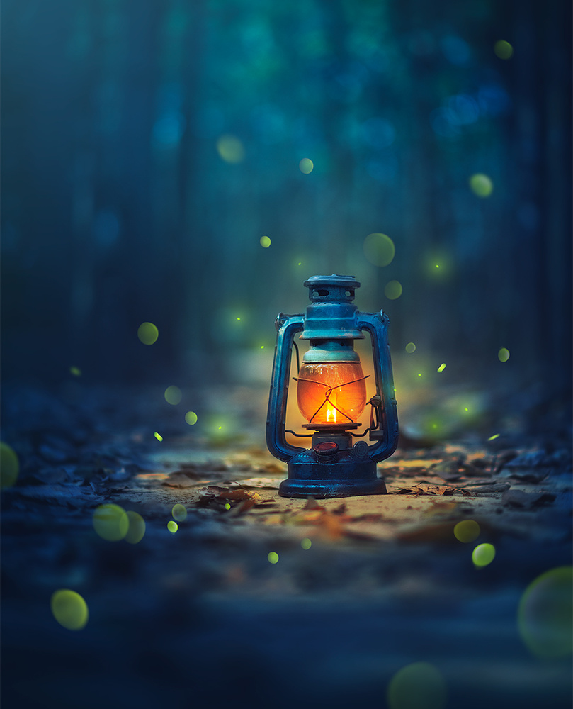 Enchanted by Ashraful Arefin