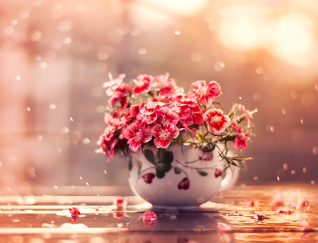 Cup of beauty by Ashraful Arefin
