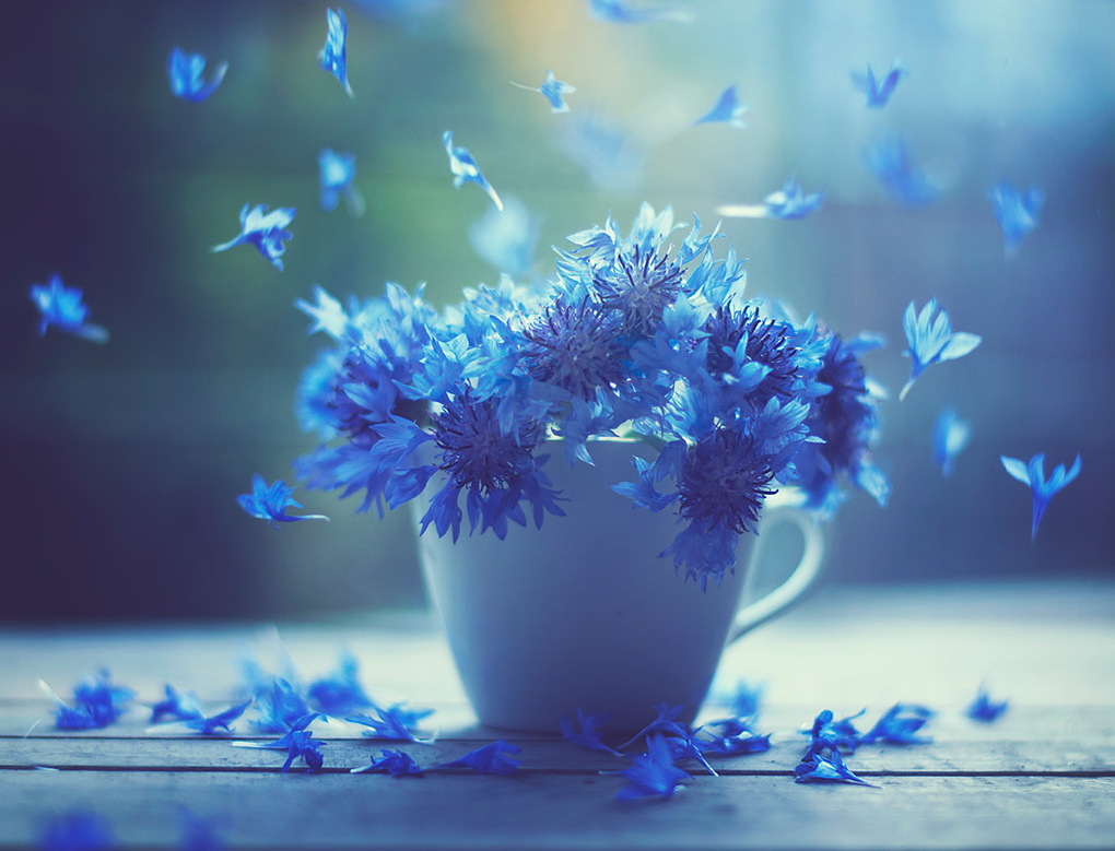 Air dancers by Ashraful Arefin