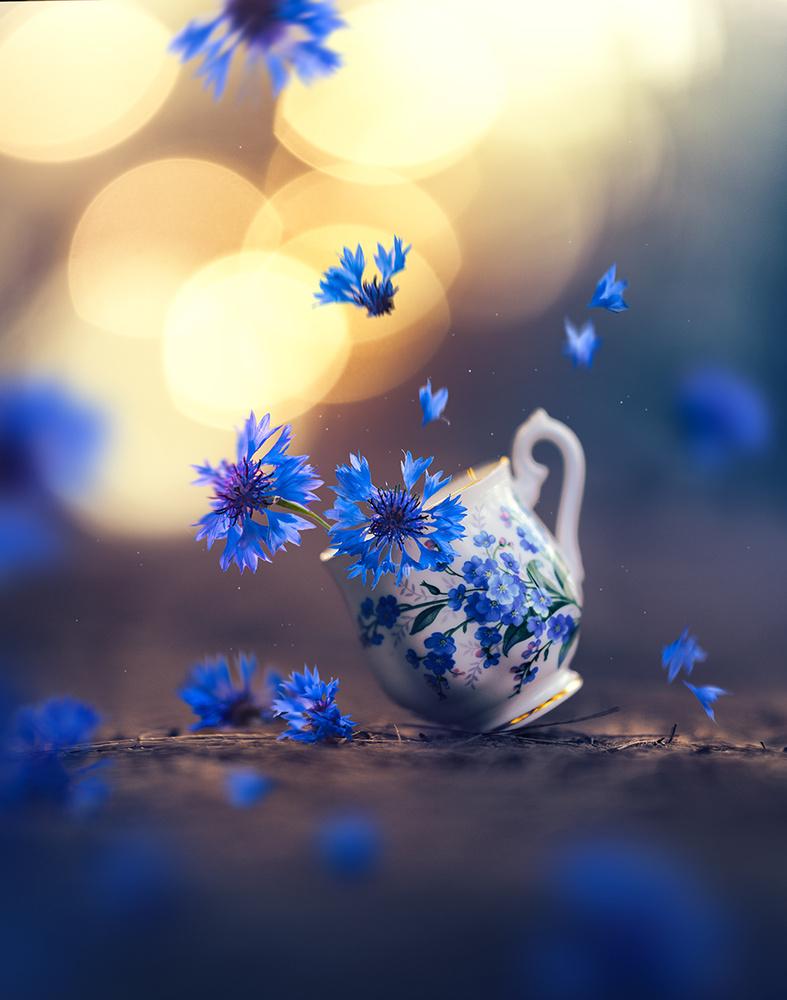 Fall into Spring by Ashraful Arefin