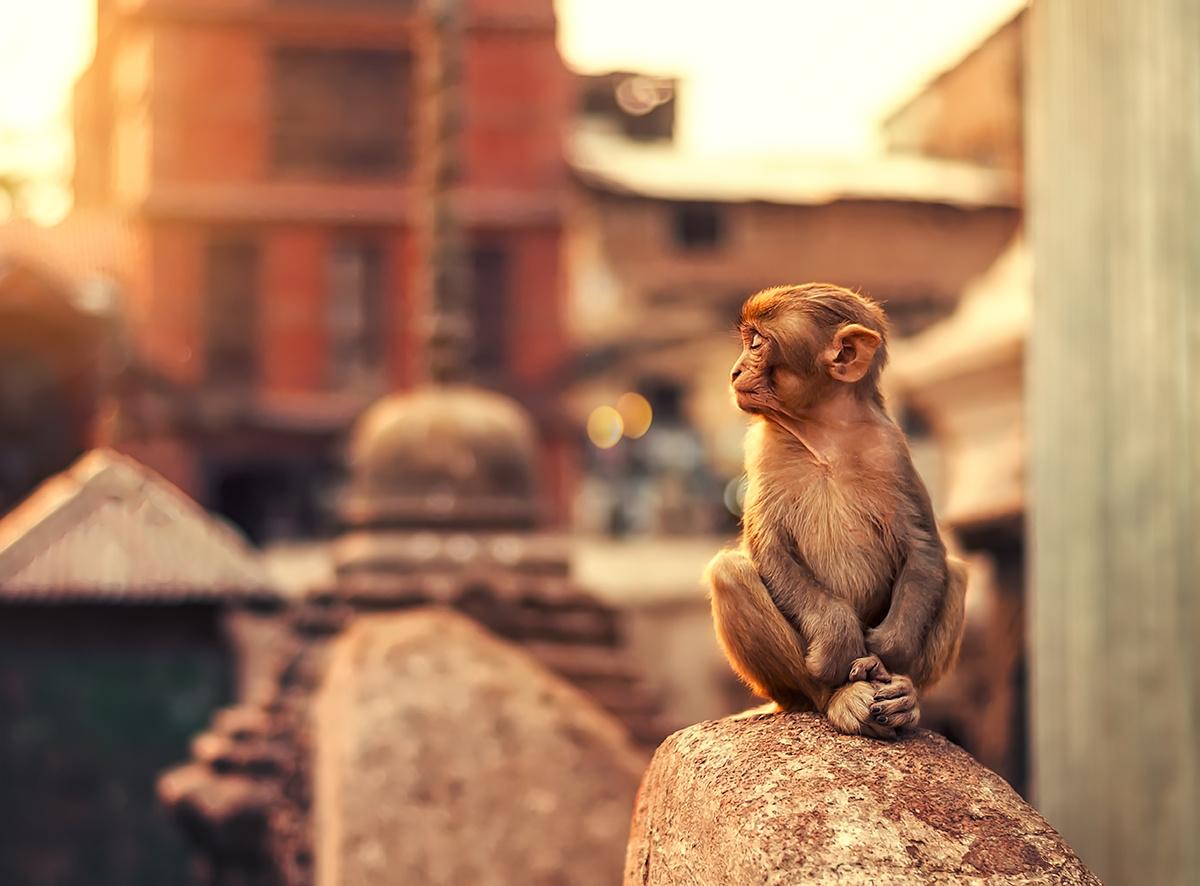 Little Yogi by Ashraful Arefin
