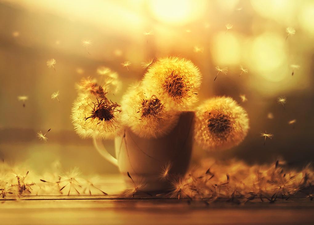 Wishful by Ashraful Arefin