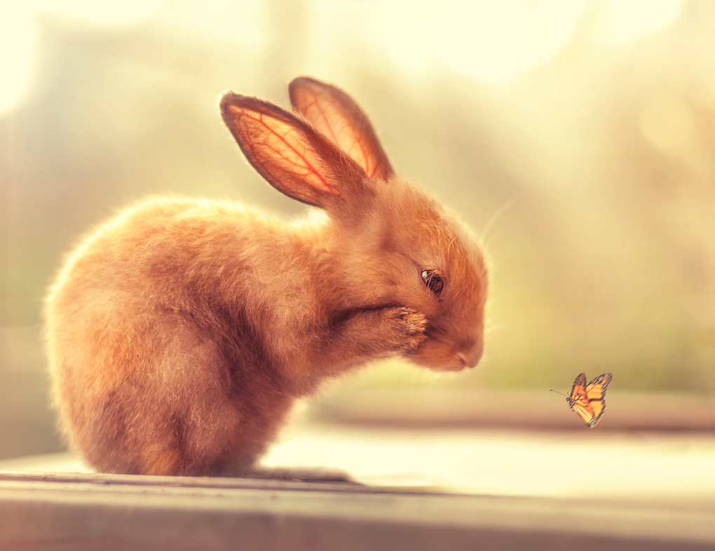 How do you fly! by Ashraful Arefin