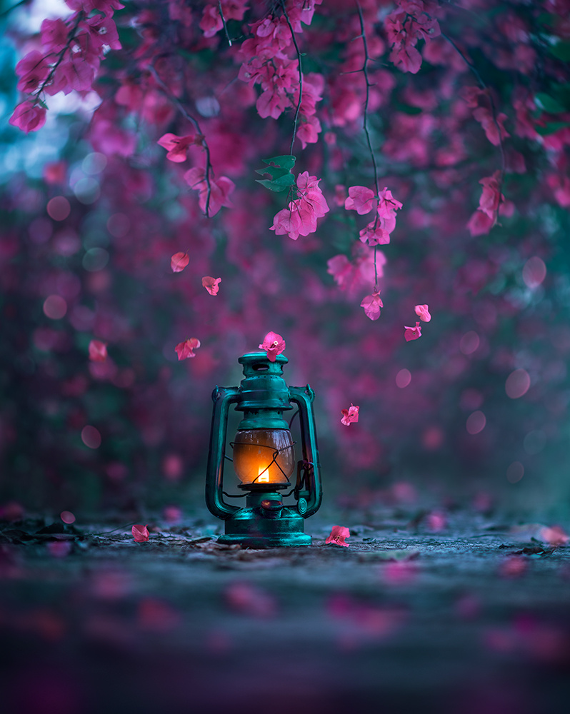 Light of Spring by Ashraful Arefin