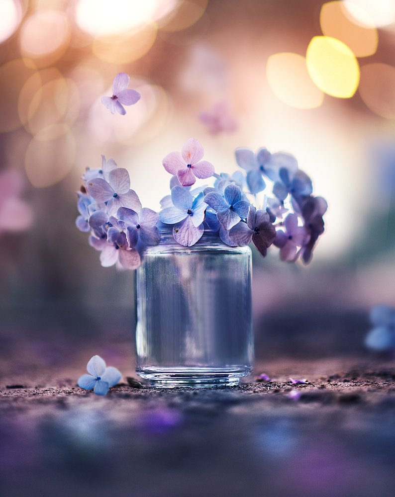 Summer melodies by Ashraful Arefin