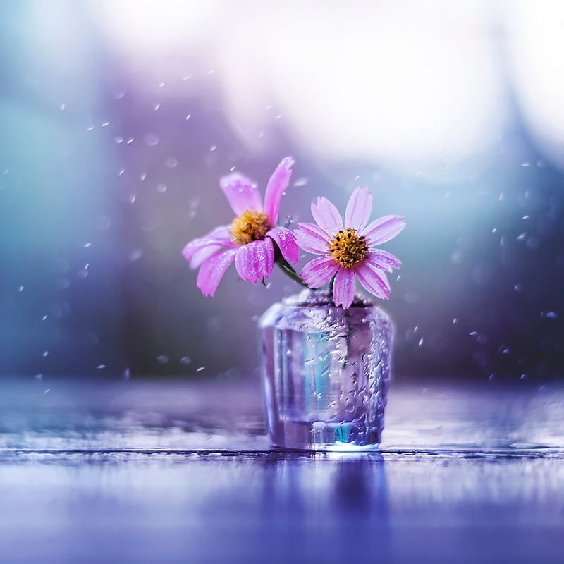 Sweet melodies  by Ashraful Arefin